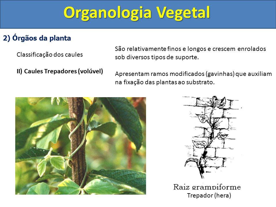 Organologia Vegetal 2) Órgãos da planta Classificação dos caules
