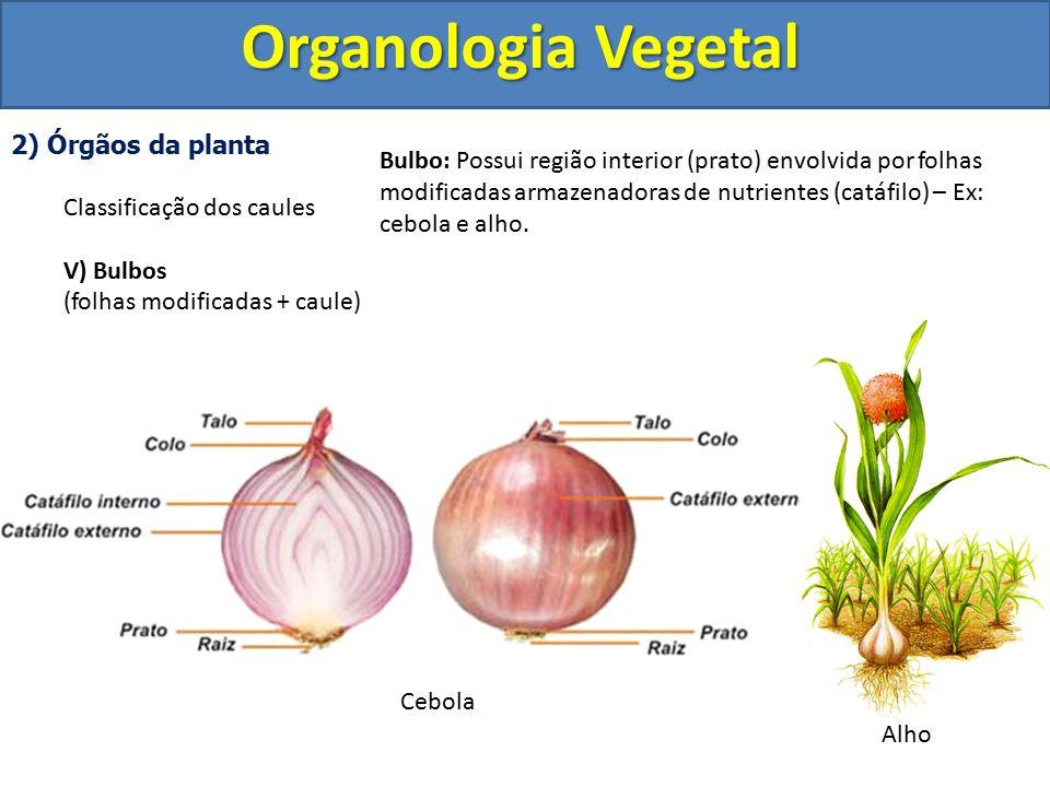Organologia Vegetal 2) Órgãos da planta