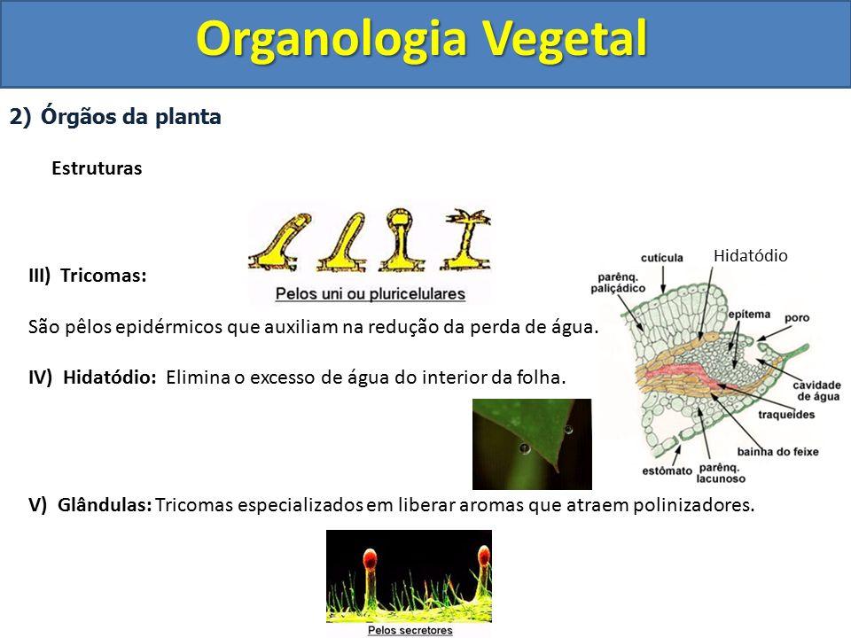 Organologia Vegetal Órgãos da planta Estruturas Tricomas: