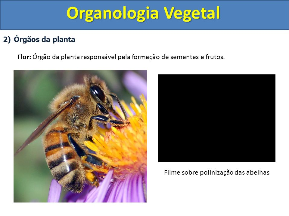 Filme sobre polinização das abelhas