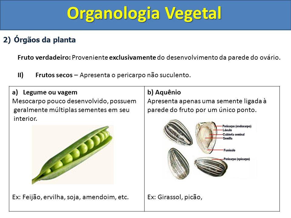 Organologia Vegetal Órgãos da planta