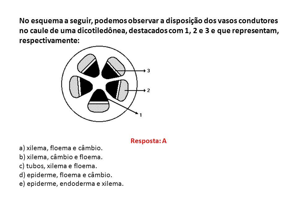 No esquema a seguir, podemos observar a disposição dos vasos condutores no caule de uma dicotiledônea, destacados com 1, 2 e 3 e que representam, respectivamente: