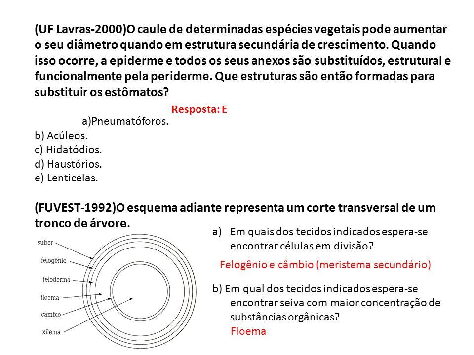 (UF Lavras-2000)O caule de determinadas espécies vegetais pode aumentar o seu diâmetro quando em estrutura secundária de crescimento. Quando isso ocorre, a epiderme e todos os seus anexos são substituídos, estrutural e funcionalmente pela periderme. Que estruturas são então formadas para substituir os estômatos