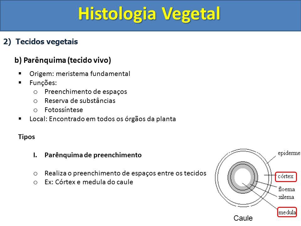 Histologia Vegetal b) Parênquima (tecido vivo) 2) Tecidos vegetais