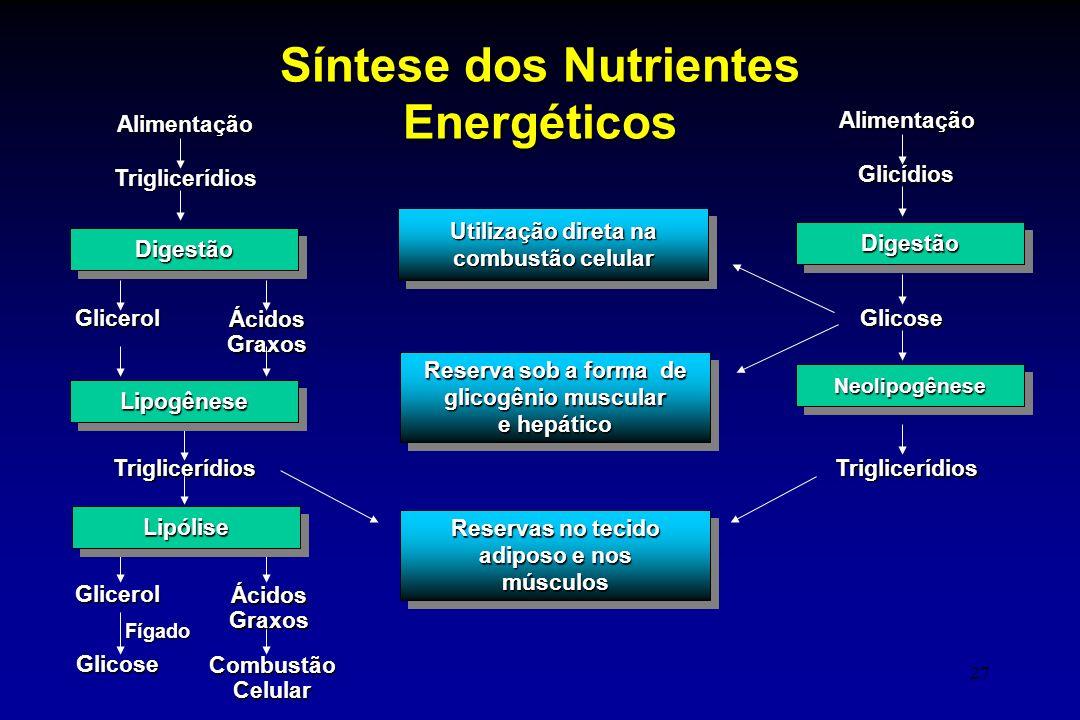 Síntese dos Nutrientes Energéticos