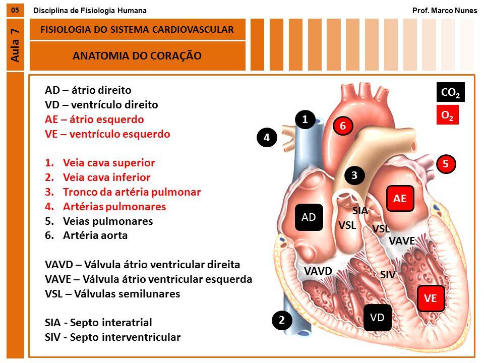 Famoso Anatomía Y Fisiología Del Sistema Cardiovascular Become ...