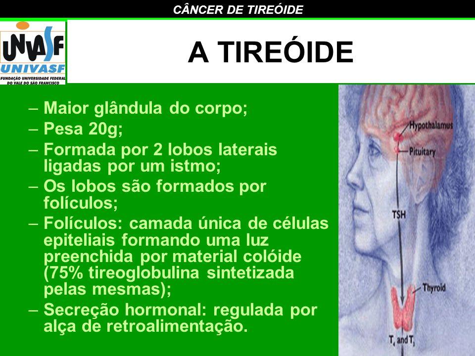 A TIREÓIDE Maior glândula do corpo; Pesa 20g;