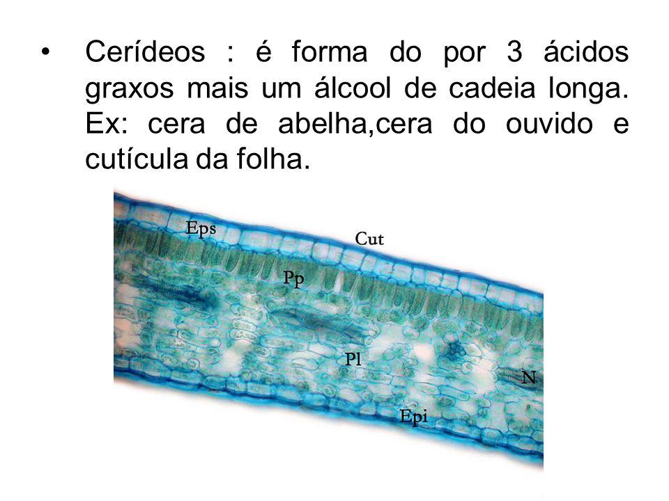 Cerídeos : é forma do por 3 ácidos graxos mais um álcool de cadeia longa.