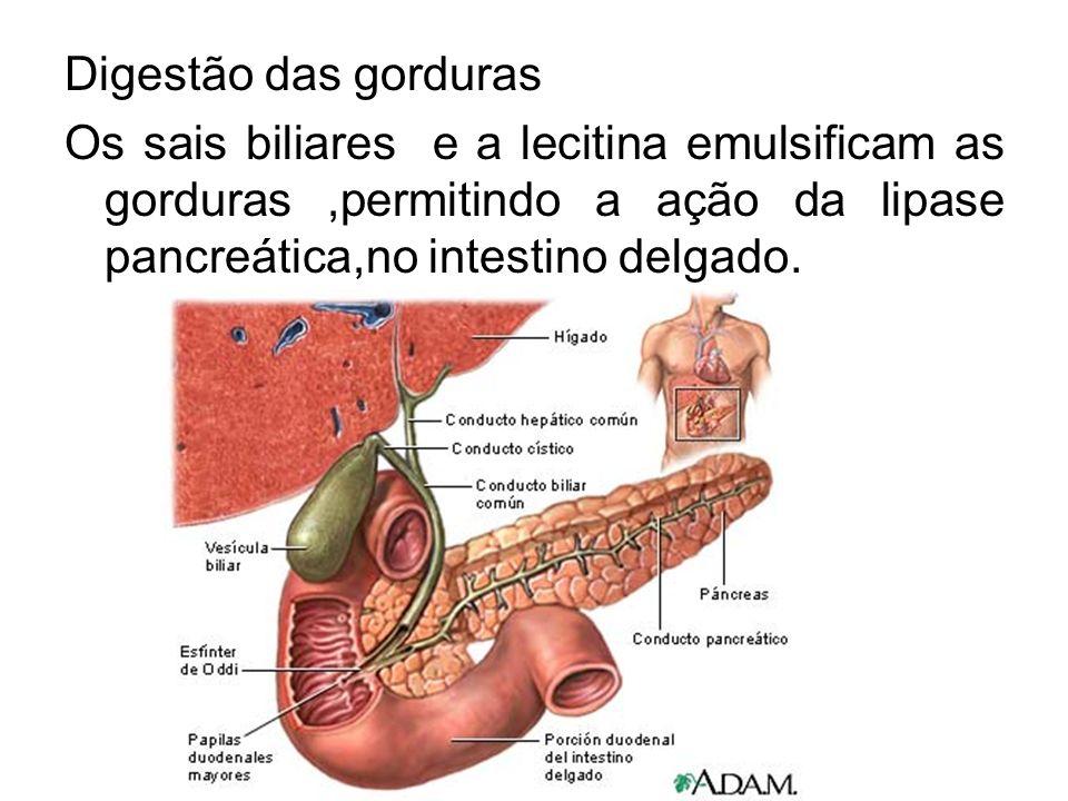 Digestão das gorduras Os sais biliares e a lecitina emulsificam as gorduras ,permitindo a ação da lipase pancreática,no intestino delgado.