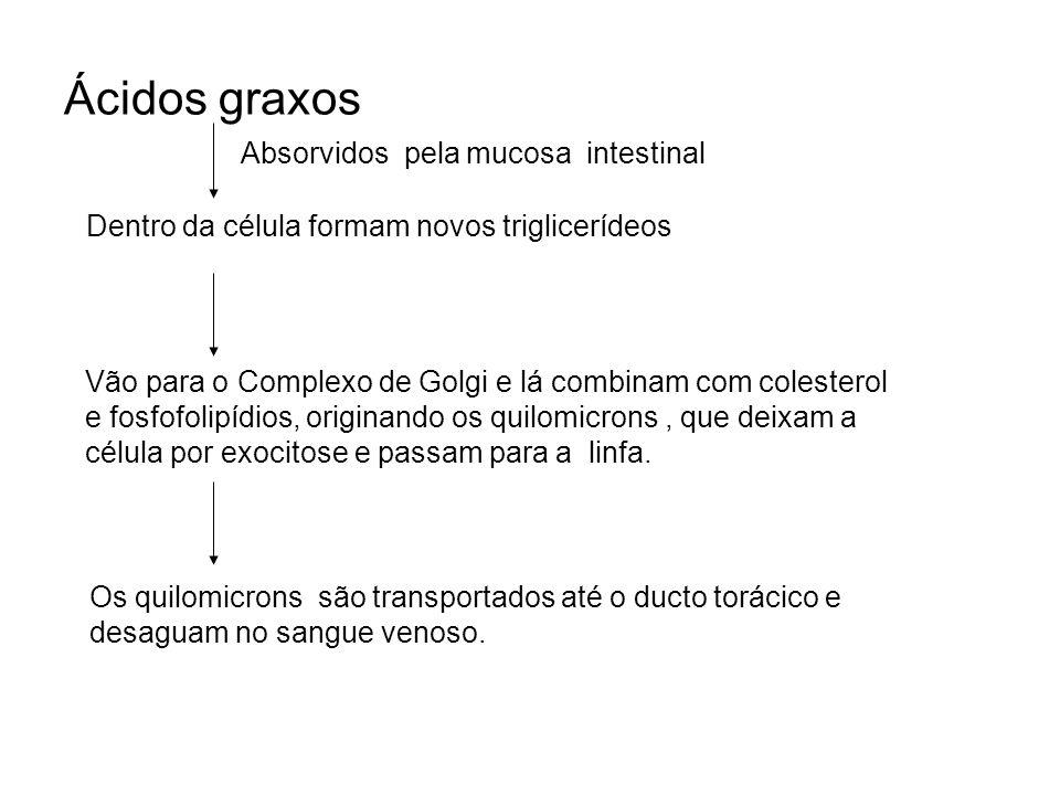 Ácidos graxos Absorvidos pela mucosa intestinal