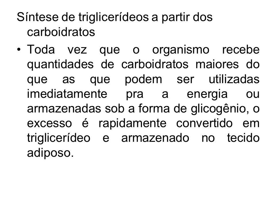 Síntese de triglicerídeos a partir dos carboidratos