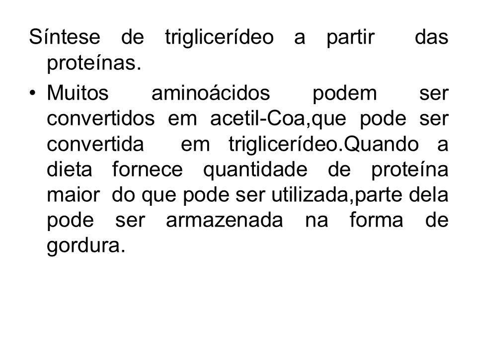 Síntese de triglicerídeo a partir das proteínas.