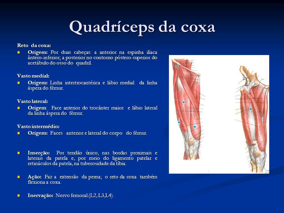 Único Vasto Medial Anatomía Bosquejo - Imágenes de Anatomía Humana ...
