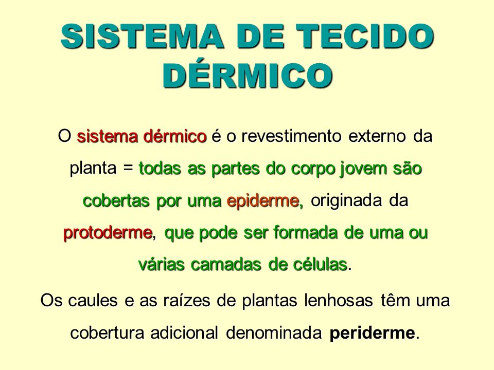 SISTEMA DE TECIDO DÉRMICO