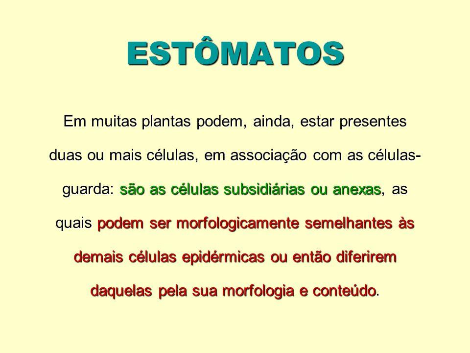 ESTÔMATOS