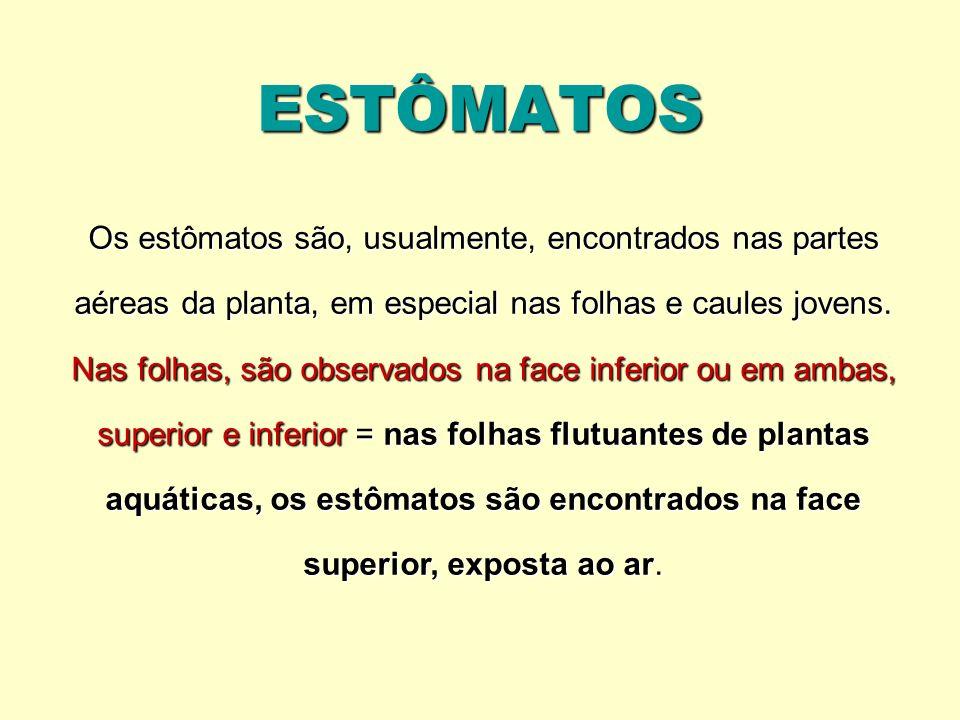 ESTÔMATOS Os estômatos são, usualmente, encontrados nas partes aéreas da planta, em especial nas folhas e caules jovens.
