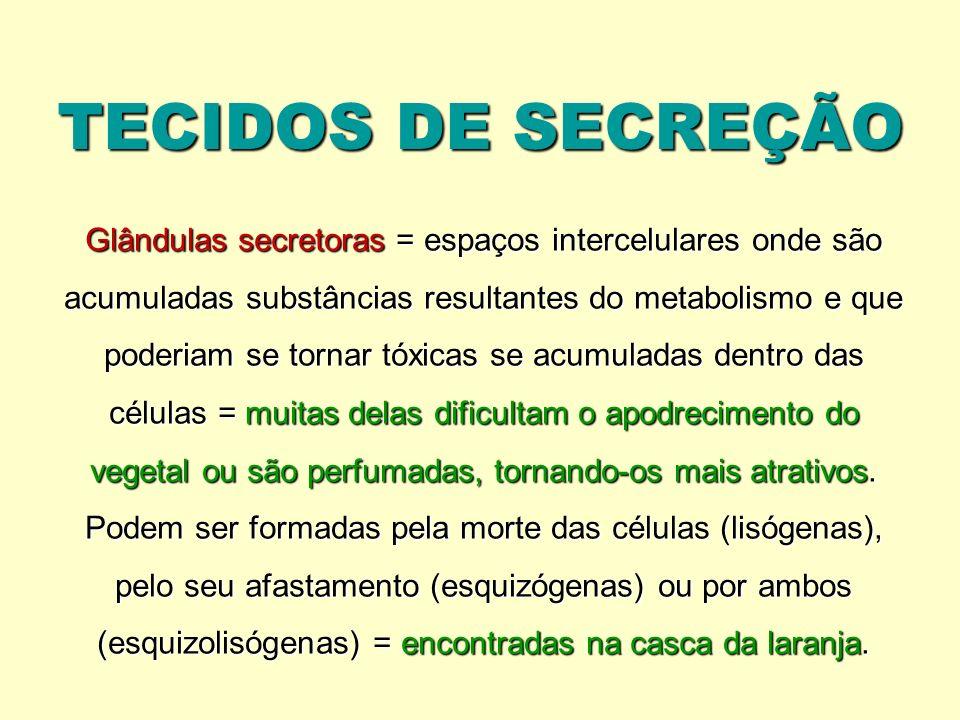 TECIDOS DE SECREÇÃO