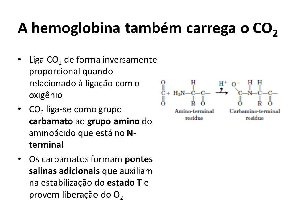 A hemoglobina também carrega o CO2