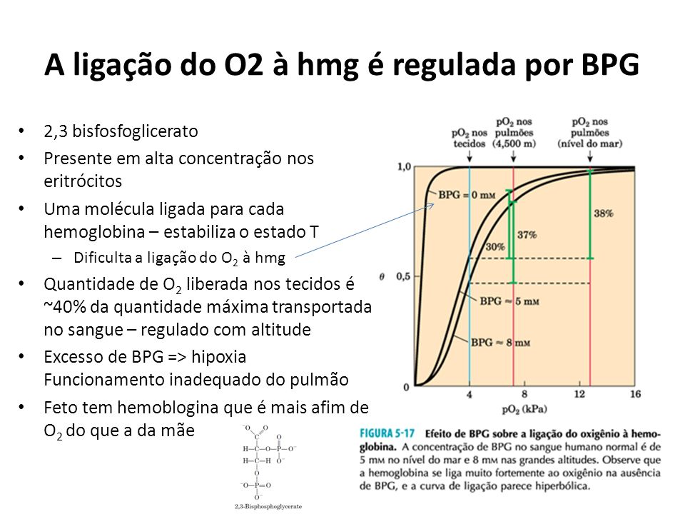 A ligação do O2 à hmg é regulada por BPG
