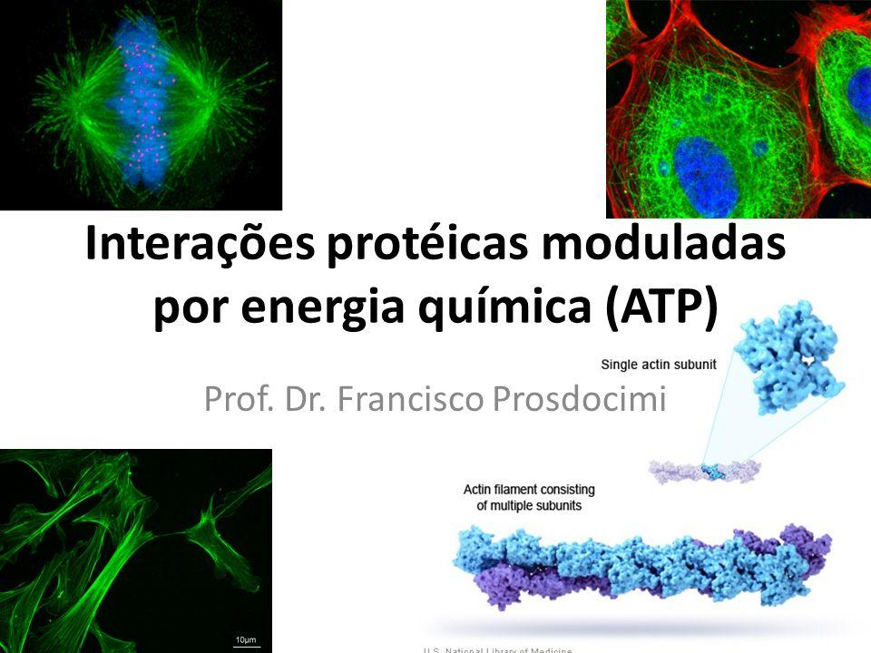 Interações protéicas moduladas por energia química (ATP)