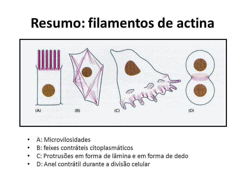 Resumo: filamentos de actina