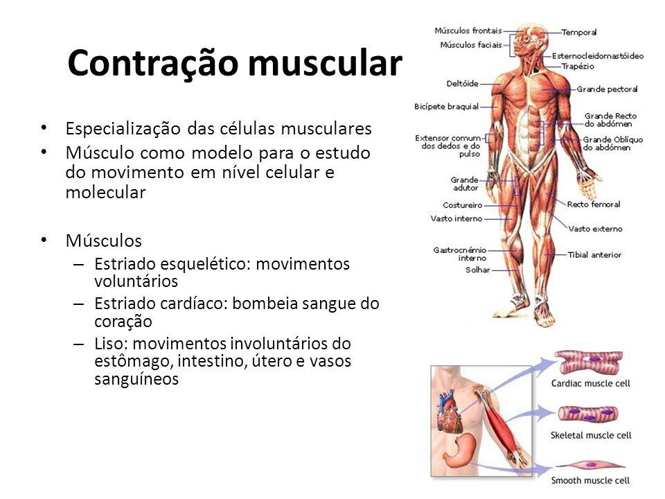 Contração muscular Especialização das células musculares