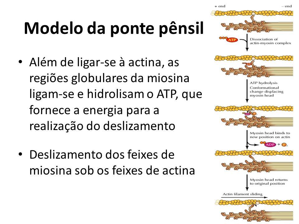Modelo da ponte pênsil