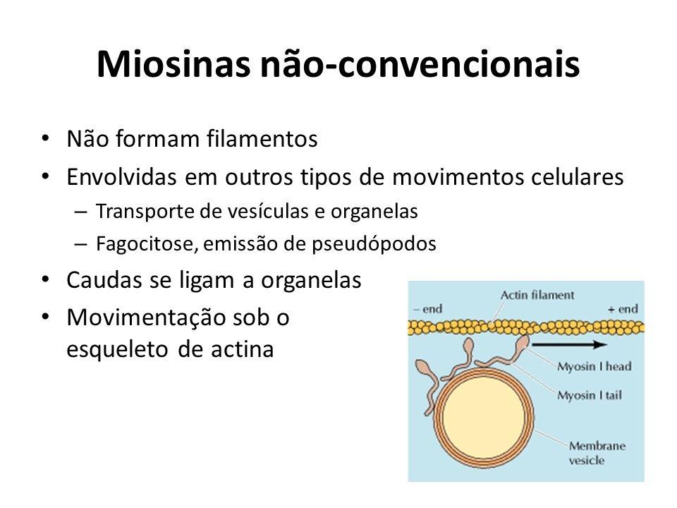 Miosinas não-convencionais