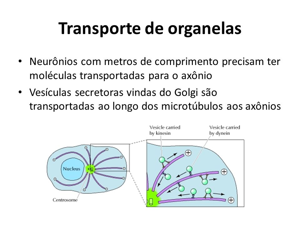 Transporte de organelas