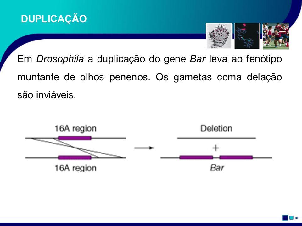 Importância da drosophila melanogaster para a ciência 1