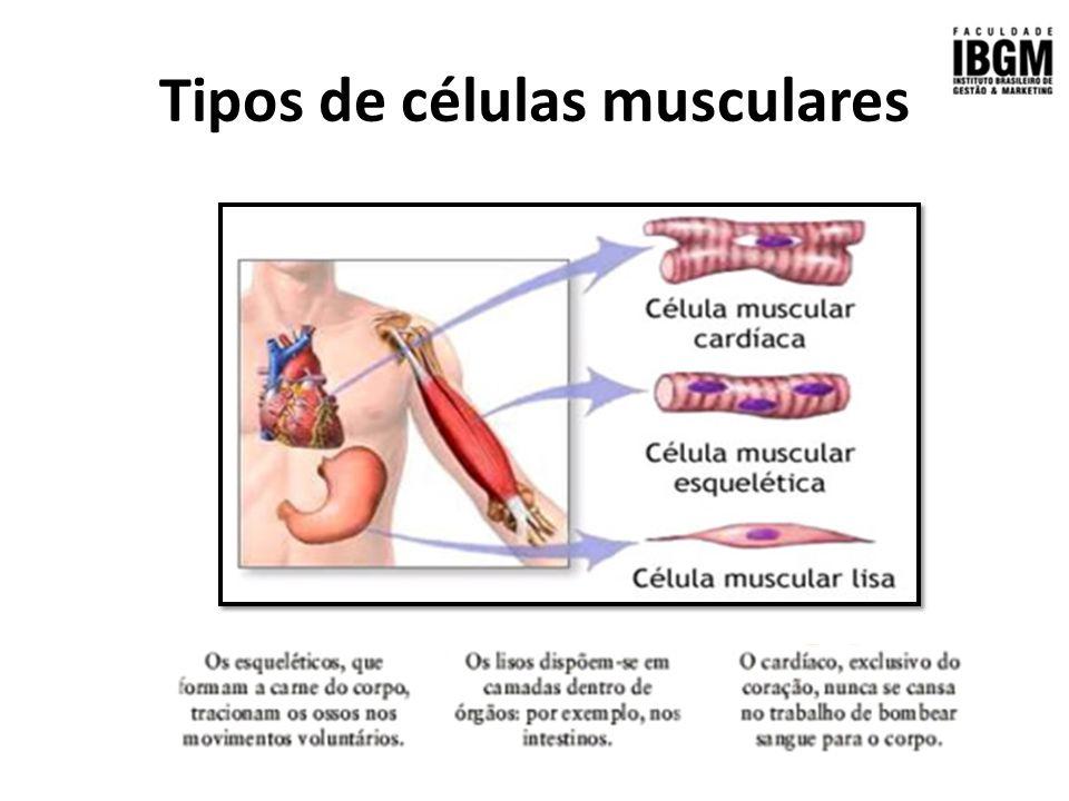 Dorable Las Células Musculares Molde - Anatomía de Las Imágenesdel ...