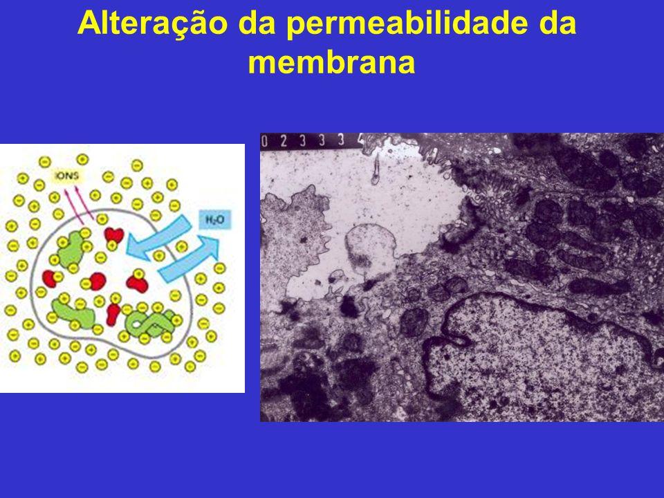 Alteração da permeabilidade da