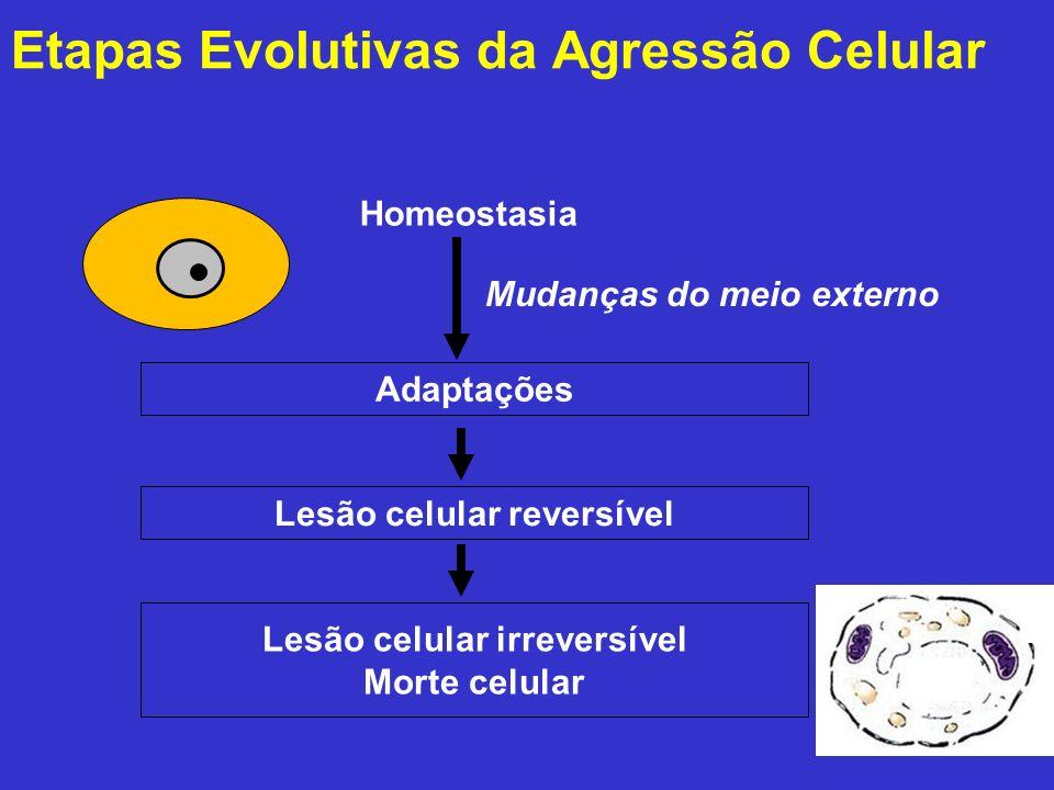 Etapas Evolutivas da Agressão Celular