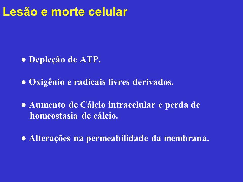 Lesão e morte celular ● Depleção de ATP.
