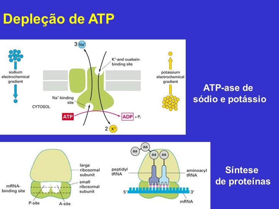 Depleção de ATP ATP-ase de sódio e potássio Síntese de proteínas
