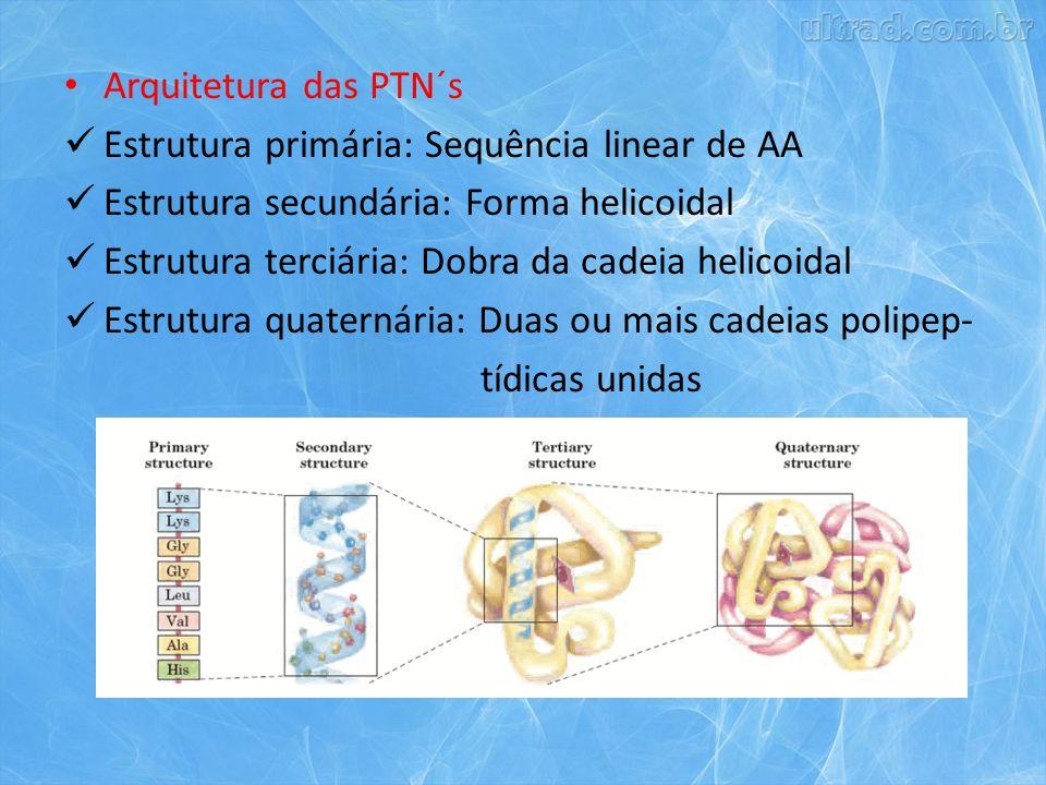 Arquitetura das PTN´s Estrutura primária: Sequência linear de AA. Estrutura secundária: Forma helicoidal.