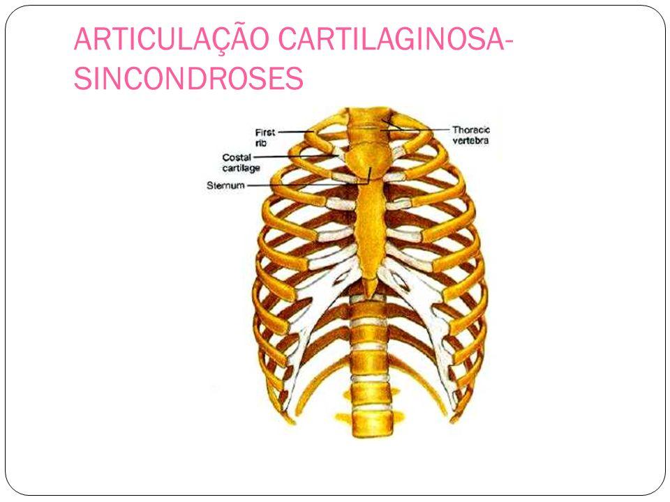 ARTICULAÇÃO CARTILAGINOSA- SINCONDROSES