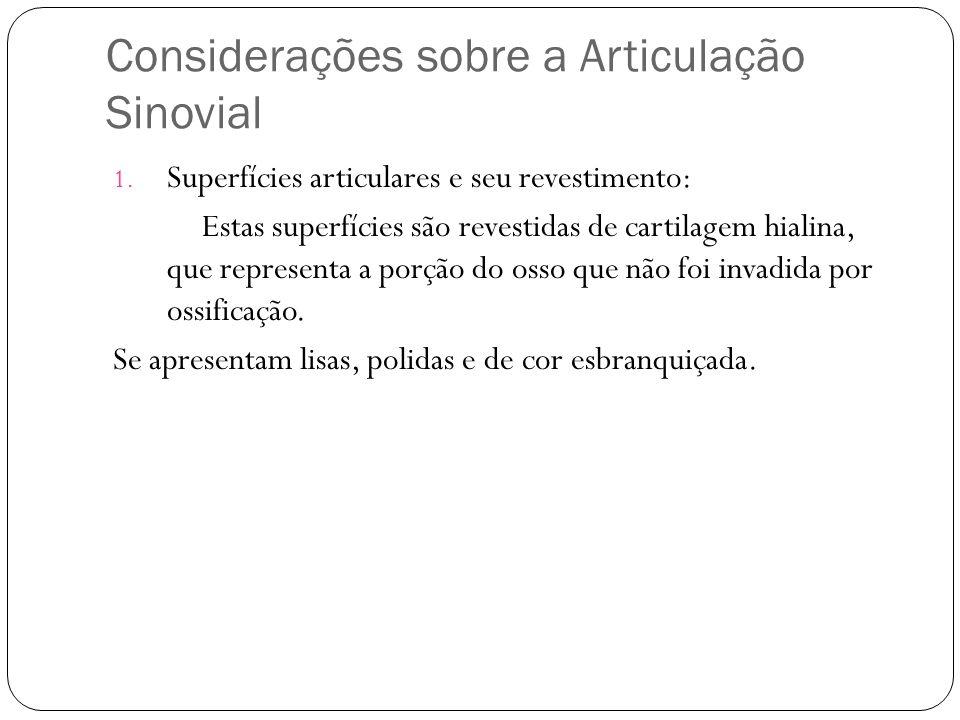 Considerações sobre a Articulação Sinovial