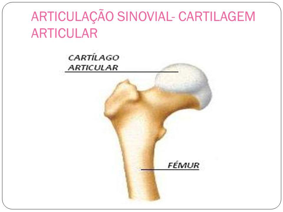 ARTICULAÇÃO SINOVIAL- CARTILAGEM ARTICULAR