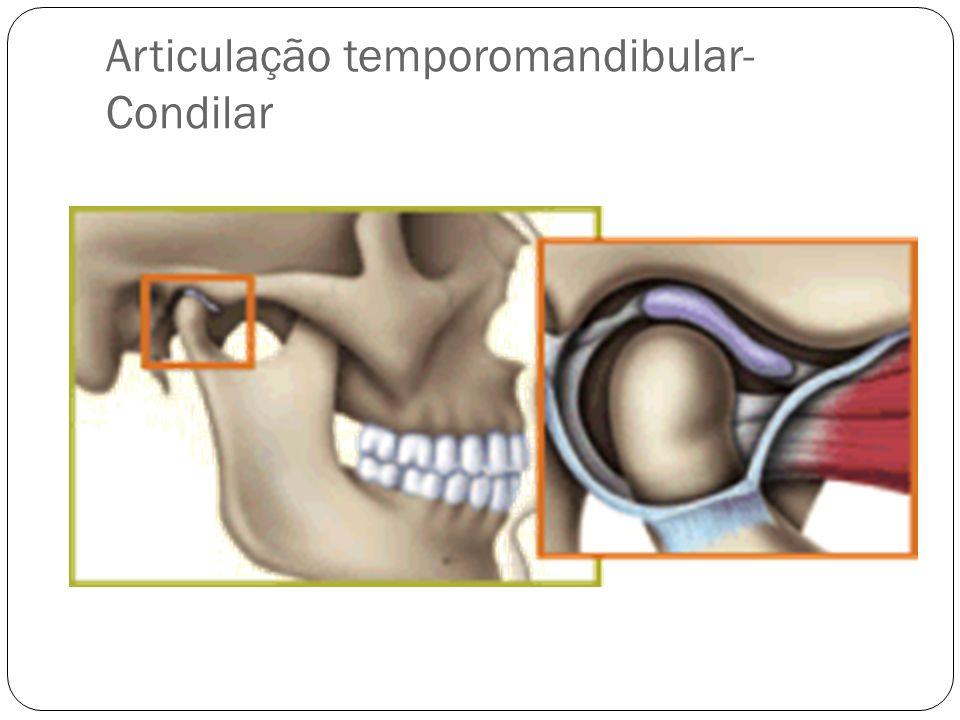 Articulação temporomandibular- Condilar