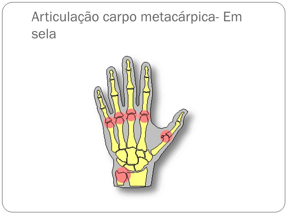 Articulação carpo metacárpica- Em sela