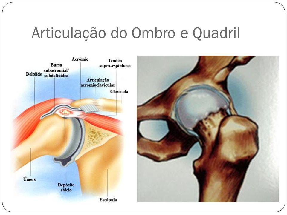 Articulação do Ombro e Quadril