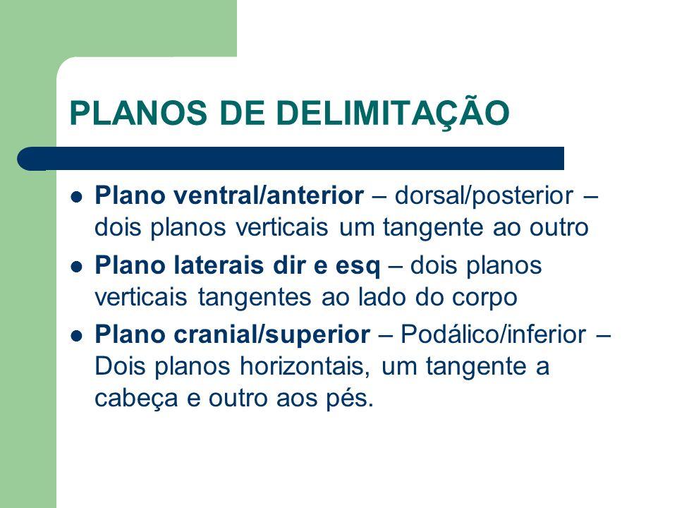 PLANOS DE DELIMITAÇÃO Plano ventral/anterior – dorsal/posterior – dois planos verticais um tangente ao outro.