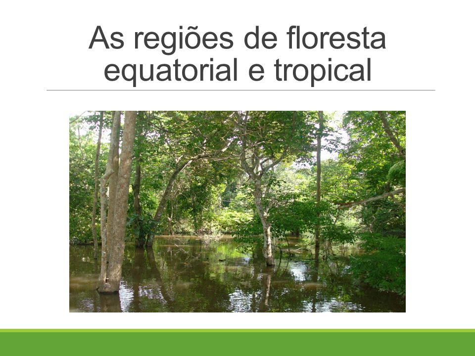 As regiões de floresta equatorial e tropical