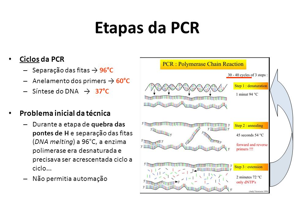 Etapas da PCR Ciclos da PCR Problema inicial da técnica