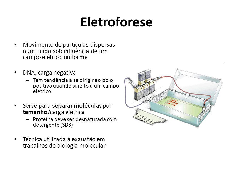 Eletroforese Movimento de partículas dispersas num fluído sob influência de um campo elétrico uniforme.
