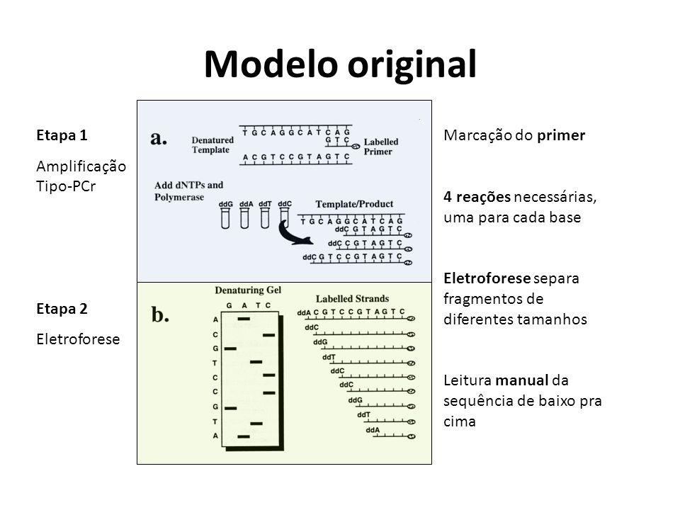 Modelo original Etapa 1 Amplificação Tipo-PCr Etapa 2 Eletroforese
