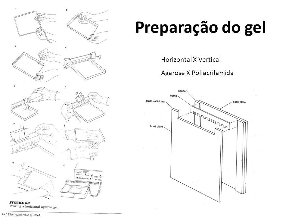 Preparação do gel Horizontal X Vertical Agarose X Poliacrilamida