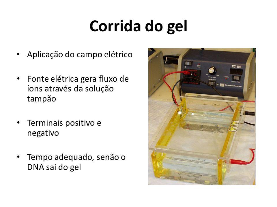 Corrida do gel Aplicação do campo elétrico