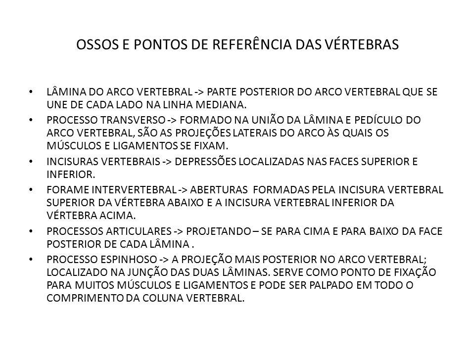 OSSOS E PONTOS DE REFERÊNCIA DAS VÉRTEBRAS